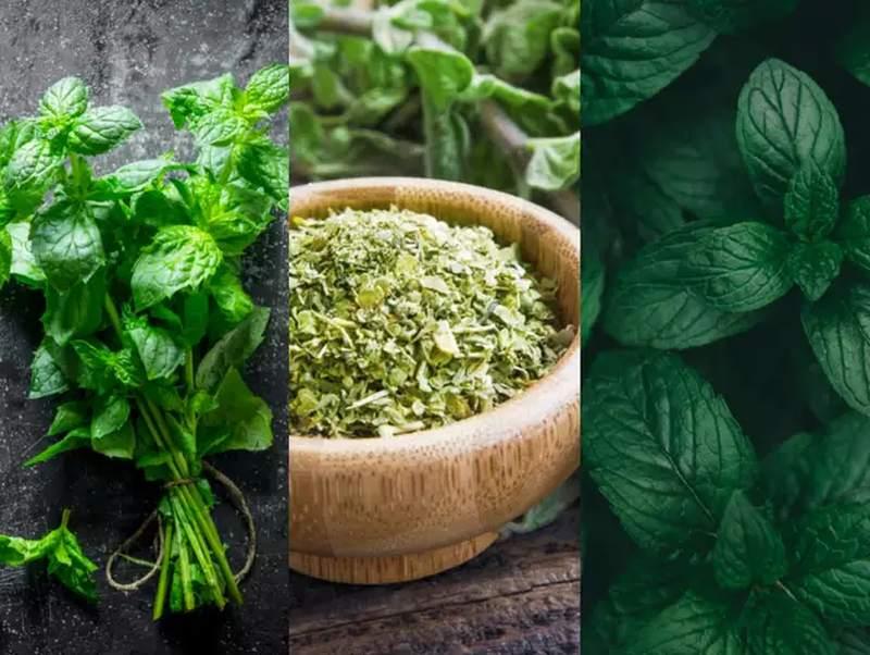 zioła wspomagają organizm w walce z nadwagą